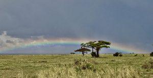 Rainbow im Amboseli