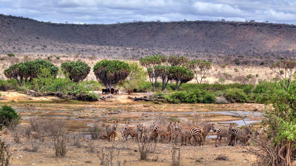 Blick auf den Sabaki River in Tsavo East National Park